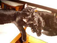 Polo en Sybert zijn omgedoopt naar Pepper en Salty, ex-kattenzorgkatten