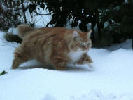 Kitty (ex-Kattenzorgkat) is niet zo gek op sneeuw!