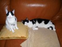 Sardi (Sjonnie) en Drella