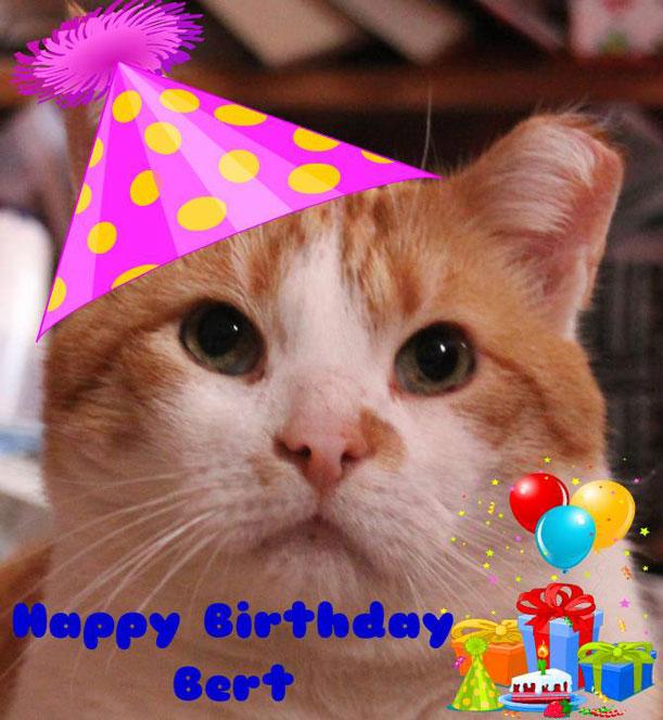 Vereniging Kattenzorg Mijn Verjaardag