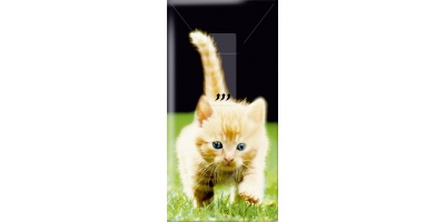 913_tissue_rood_kitten
